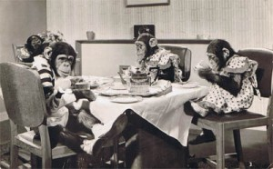 chimp-tea